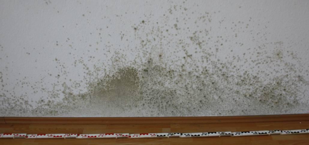 Gutachter - Schimmelbefall auf der Innenseite einer Außenwand in Bonn und Sachverständiger